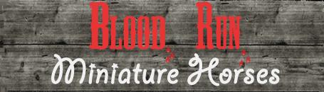 Blood Run Miniature Horses